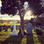 grave-tree-sun